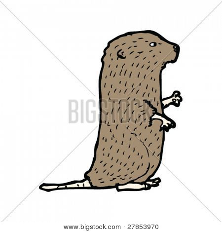 water vole illustration