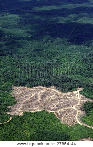 Borneo ontbossing
