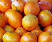 pic of valencia-orange  - Valencia Oranges at an outdoor market - JPG