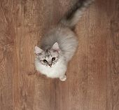 One Gray Kitty With Big Eyes Sitting On Wooden Floor Above Top View poster