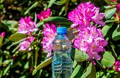 A Bottle Of Drinking Water Stands Against The Background Of A Violet Rhododendron poster