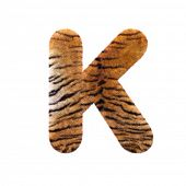 Tiger letter K - Large 3d Feline fur font isolated on white background. This alphabet is perfect for poster