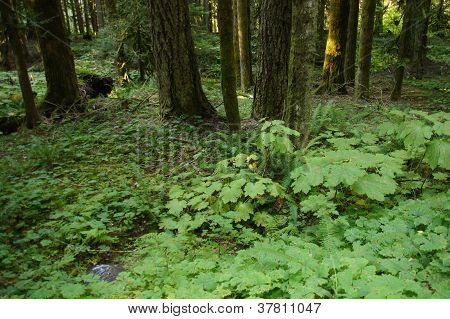 Green Ferns And Undergrowth