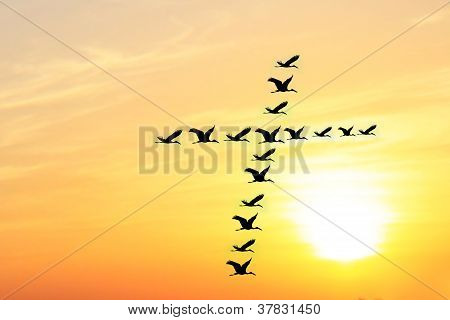 Beautiful & Heavenly Sky In The Evening With Birds Forming Holy Cross Shape As They Fly Together In
