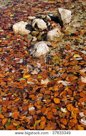 Stones And Autumn Leafs In The Water Of A Lake