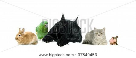 Group of pets together