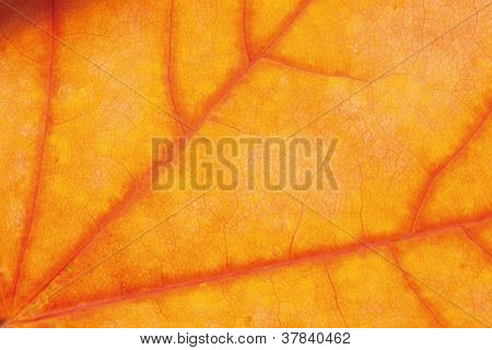 Yellow Red Leaf Background