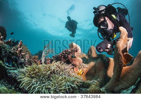 Diver and clownfish