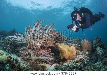 diver and soft coral