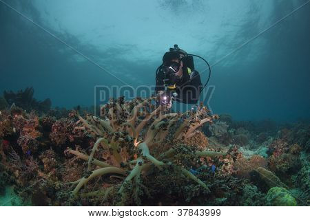 diver reviewing a healthy reef