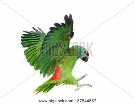 Festival de vôo papagaio