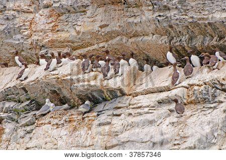 Seabirds On A Nesting Island