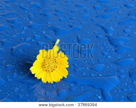 Yellow flower on a rainy day
