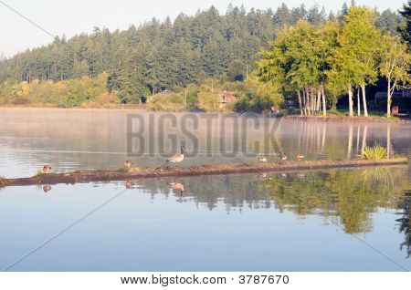 Mirrored Lake With Waterbirds