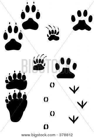 Paw Prints - Animal Tracks W/ Working Path