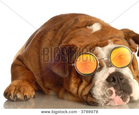 Bulldog With People Eyes