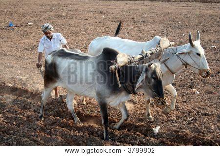 indischen Punjab farmer