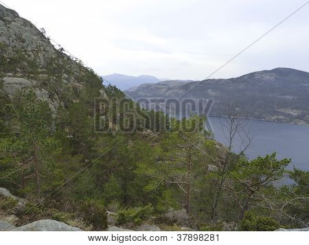 Forest At Steep Mountain With Fjord In Background