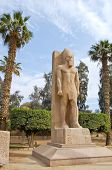 stock photo of ramses  - Statue Of Ramses II In Open Air Museum Of Memphis - JPG