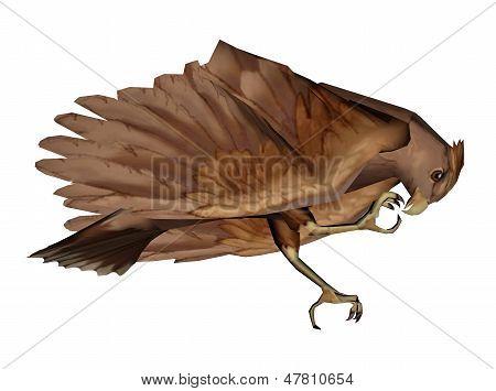 Hawk eating