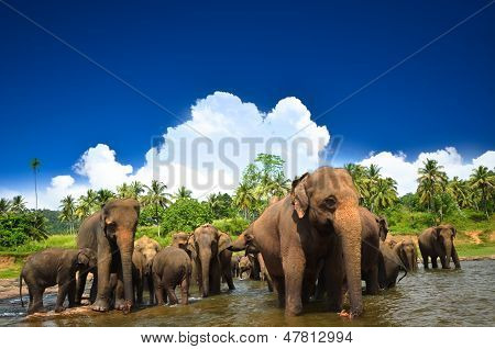 Beautiful Nature. Young elephants playing in the beautiful landscape