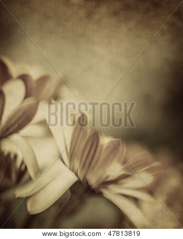 Grunge photo of daisy flowers, old grungy image of tender chamomile, abstract floral background, dreamy nature