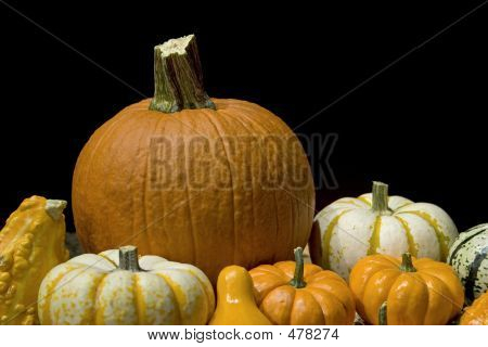 Pumpkins On Black Background
