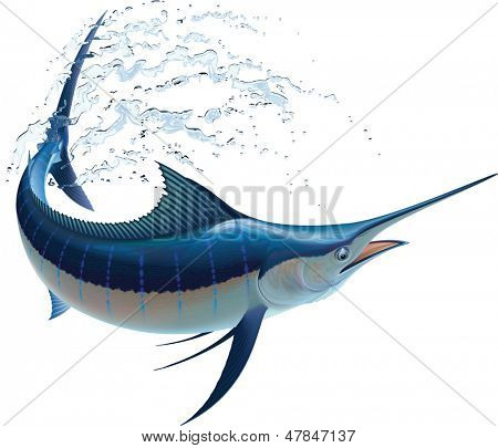 Blue marlin swinging in water sprays. Raster image isolated on white background. Find an editable version in my portfolio.