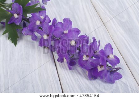 delphinium flower on a wooden table