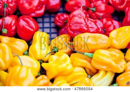 Fresh Healthy Red Yellow Peppers