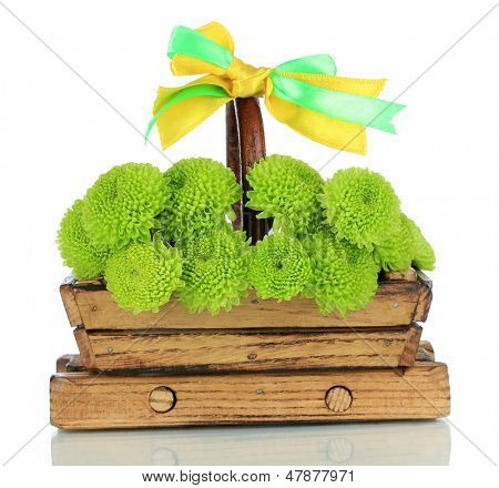 Beautiful green chrysanthemum in wooden basket isolated on white