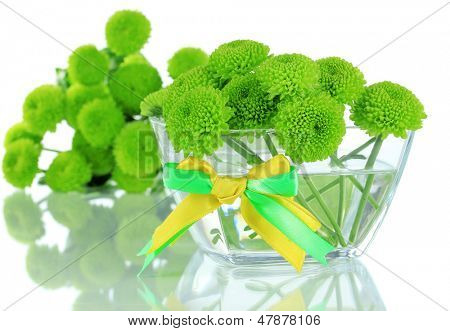 Beautiful green chrysanthemum in bowl isolated on white