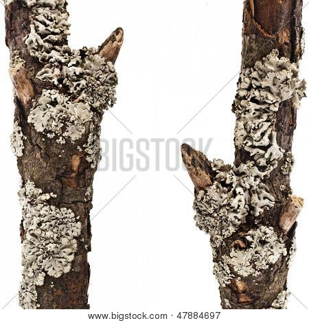 border frame of dry wood branches close up isolated on a white background