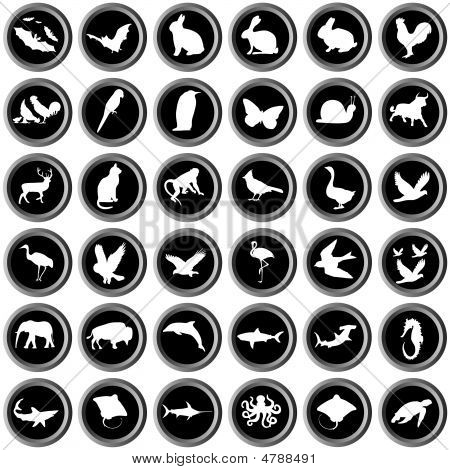 Metal Buttons With White Animals On Black