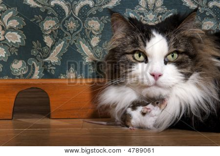 Cat And Mouse In A Luxury Old-fashioned Roon