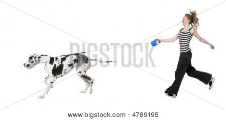 Young Girl Walking His Dog (great Dane 4 Years) Harlequin Great Dane