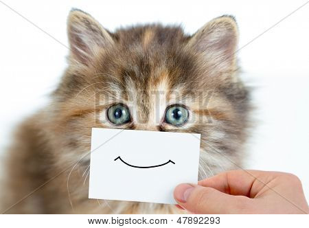 funny kitten portrait with smile on card