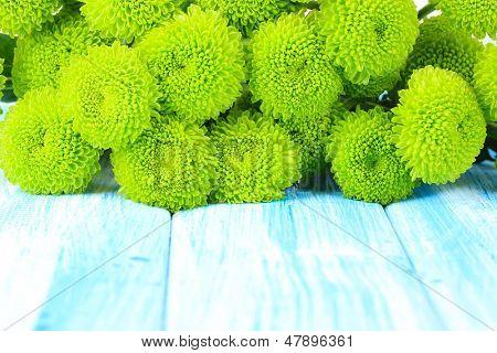 Beautiful green chrysanthemum on table close-up