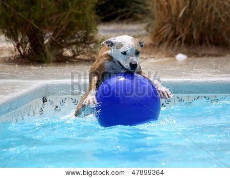 Dog jumping on her ball