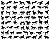 stock photo of bridle  - Different black silhouettes of Horses - JPG