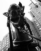 picture of blinders  - A hardworking carriage horse waiting for customers by Central Park  - JPG