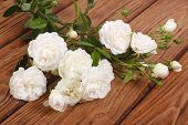 foto of climbing rose  - flowers white climbing rose on a wooden table - JPG