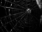 pic of spiderwebs  - This is a beautiful - JPG