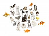 Arrangement Of 22 Domestic Animals poster