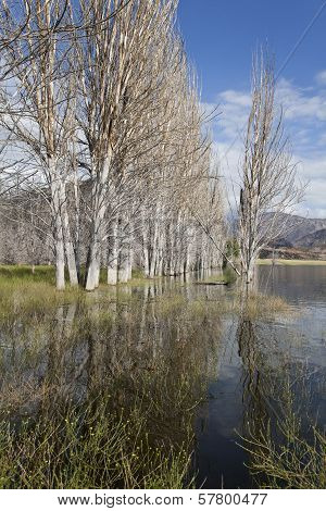 Group Of Bare Trees In A Lake Near Potrerillos.