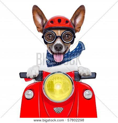 Crazy Silly Motorbike Dog