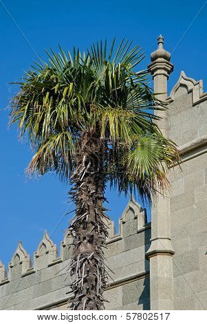 Palm Tree And Fragment of Eastern Palace