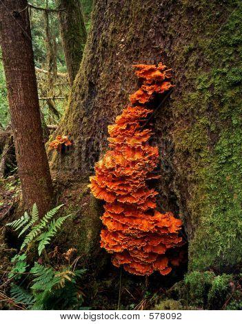 Orange Tree Fungus