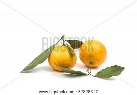 Ripe Tangerine Over White