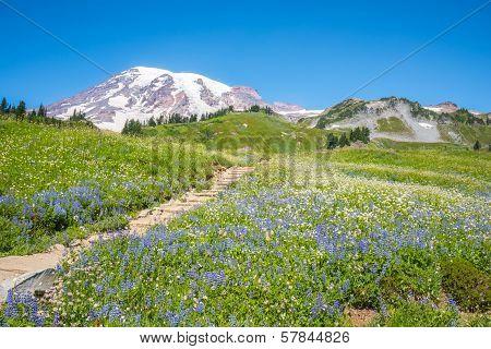 Snowy Mountain Peak and Wildflowers